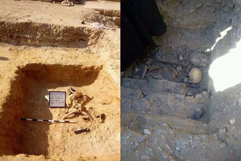 Wraz ze szkieletem nastolatki znaleziono także czaszki byków /materiały prasowe