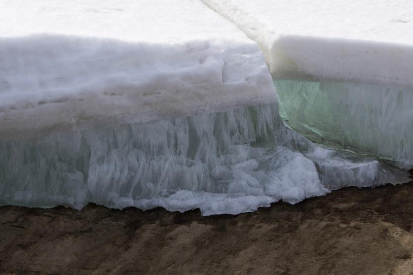 Wrotka odnaleziono w wiecznej zmarzlinie na Syberii /123RF/PICSEL