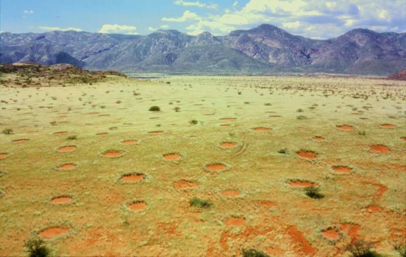 Wróżkowe kręgi w Namibii /Wikipedia