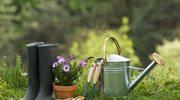 Wrześniowe prace w ogrodzie i na balkonie