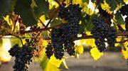 Wschodniostyryjski Rzymski Szlak Wina