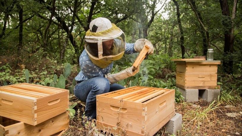 wspieranie pszczelarzy /© Photogenica