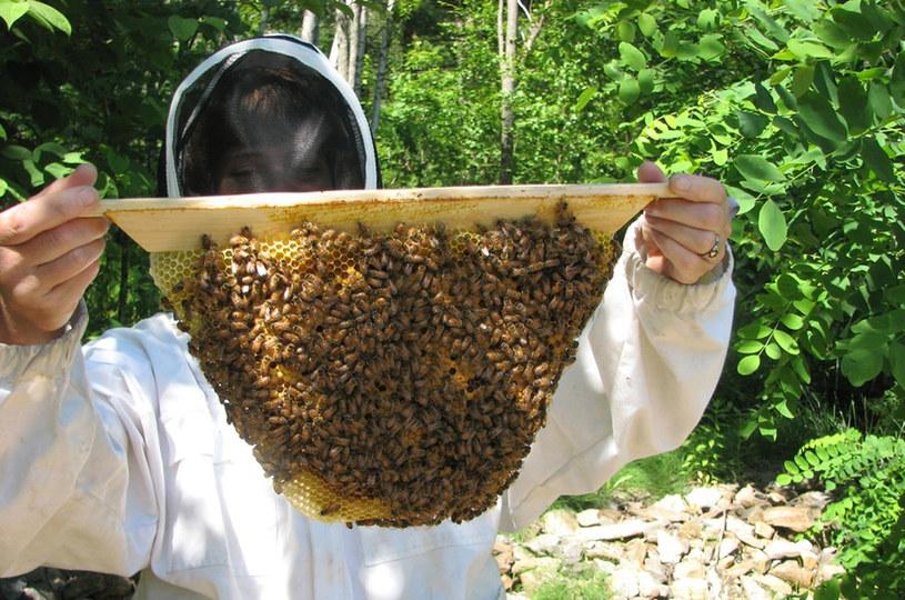 wspieranie pszczół /© Photogenica