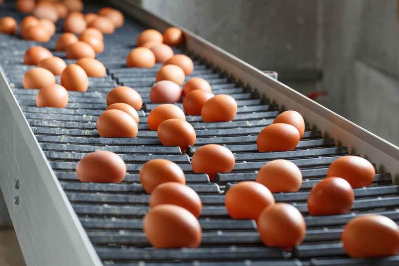 Wszystkie jajka (także te od kur z wolnego wybiegu) są pod stałą opieką weterynaryjną /123RF/PICSEL