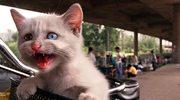 Wszystkie koty będą wysterylizowane do 2016 roku?