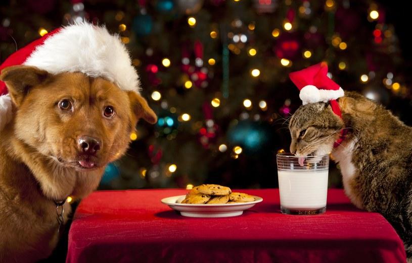 Wszystkie potrawy zawierające toksyczne produkty dla psów są potencjalnie niebezpieczne. /123RF/PICSEL