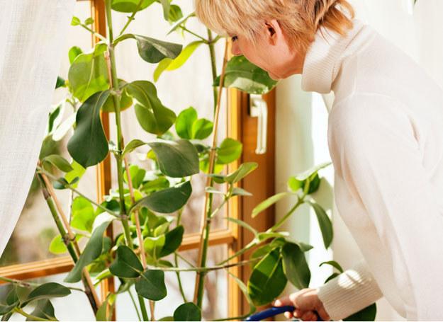 Wszystkie rośliny znakomicie poprawiają mikroklimat w mieszkaniu! /© Panthermedia