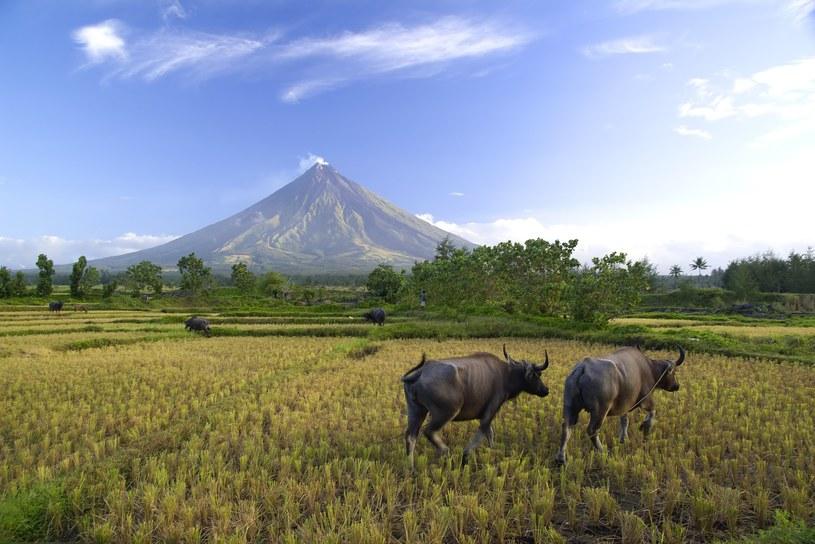Wulkan Mayon na Filipinach /123/RF PICSEL