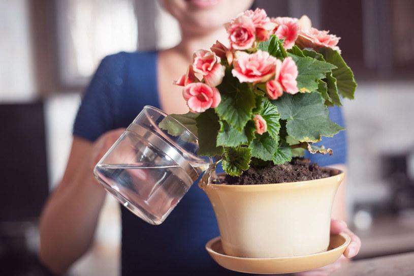 Wybieraj rośliny, które nie potrzebuja dużo uwagi /123RF/PICSEL