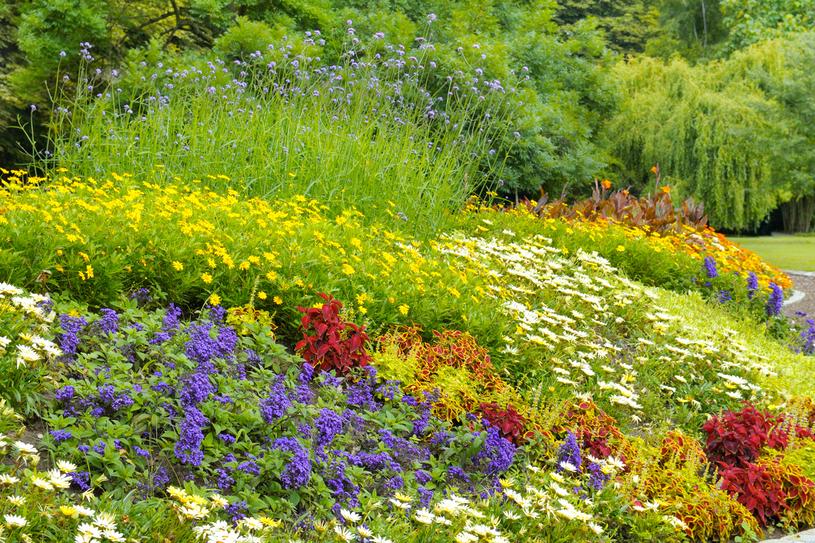 Wybieraj rośliny łatwe w uprawie, o długim okresie kwitnienia /123RF/PICSEL