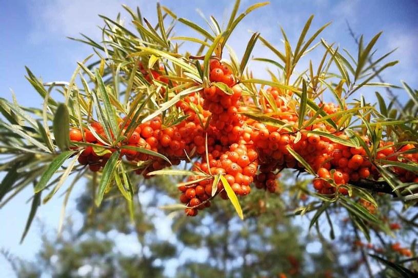 Drzewka I Krzewy Owocowe Które Warto Mieć W Ogrodzie Stylpl