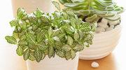 Wybierz idealne rośliny dla siebie
