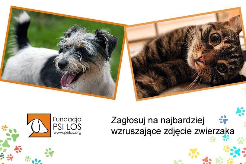 Wybierz zdjęcie najbardziej wzruszającego zwierzaka! /INTERIA.PL