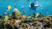 Wybrzeże Adriatyku - idealne miejsce do snorkelingu