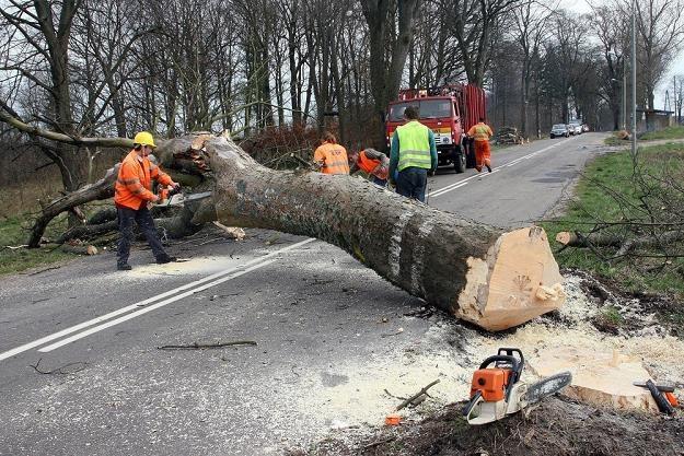 Wycinać przydrożne drzewa? / Fot: Przemysław Gryn /Reporter