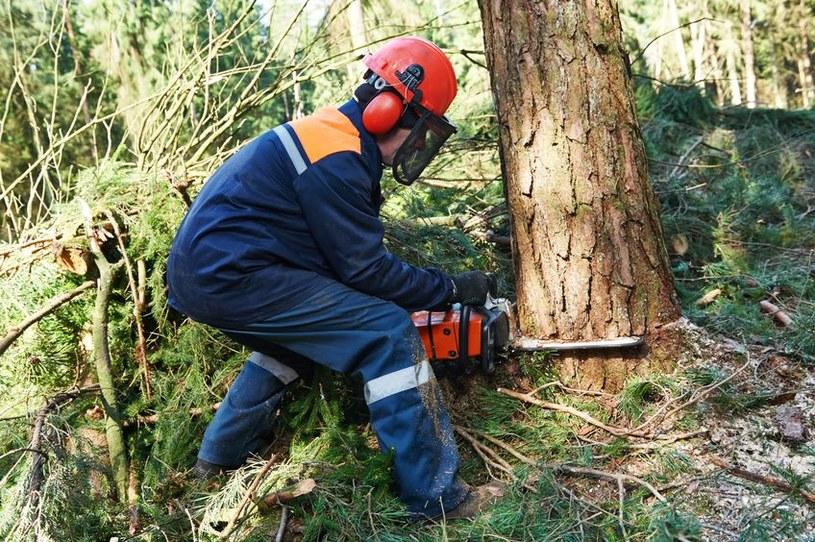 Wycinka drzew nie jest tak zła jak do tej pory sądzono? /123RF/PICSEL