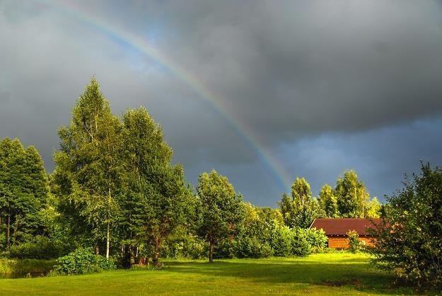 Wycinka drzew - stawki kar zdecydowanie niższe /©123RF/PICSEL