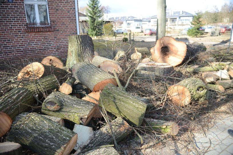 Wycinka drzew zostanie powstrzymana? /MARIUSZ KAPALA / GAZETA LUBUSKA / POLSKA PRESS /East News