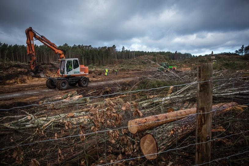 Wycinka lasu pod przekop Mierzei Wiślanej /Krzysztof Mystkowski/KFP /Reporter