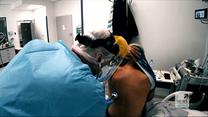 """""""Wydarzenia"""": Naukowcy wykryli brazylijski wariant koronawirusa na Śląsku"""