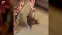 Wydra znalazła sobie nową zabawę. Na czym polegała?