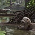 Wydry wielkie jak wilki - takie żyły sześć mln lat temu