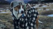 Wyjątkowa przyjaźń psa i kota. Razem zwiedzają świat!