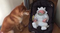 Wyjątkowa więź między psem a dzieckiem. Urocze