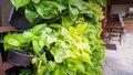 Wyjątkowo odporne rośliny dla zapominalskich