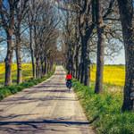 Wykluczenie transportowe: to nie jest problem tylko Polski wschodniej
