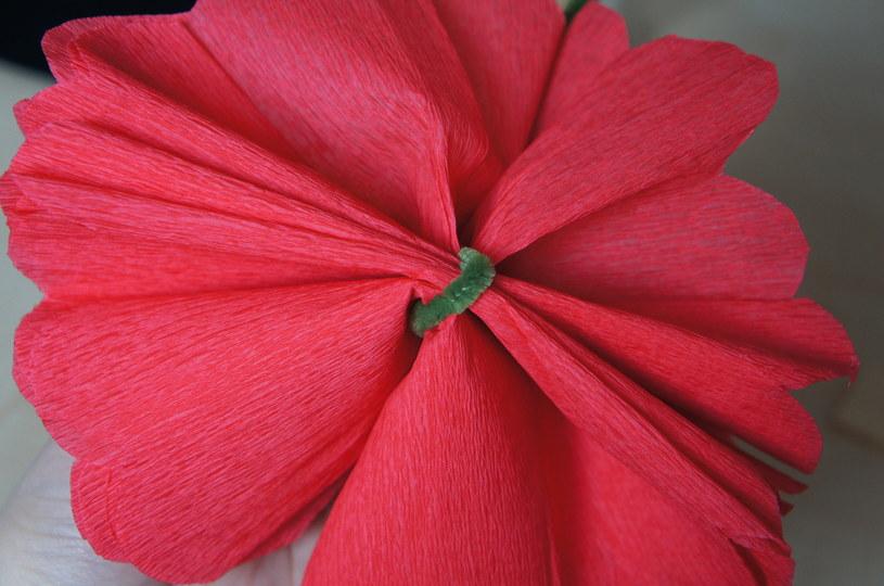 Wykończ kwiatka /INTERIA.PL