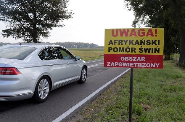 Wykryto ASF u świń w powiecie siedleckim. Fot. Piotr Mecik /Agencja SE/East News