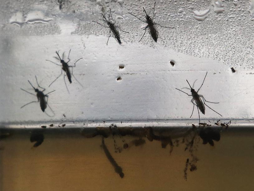Wylęgarnią komarów Aedes aegypti sa zbiorniki stojącej wody /Mario Tama /Getty Images