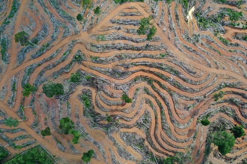 Wylesione obszary plantacji palm olejowych w indonezyjskiej wiosce Bawa /HOTLI SIMANJUNTAK    /PAP/EPA