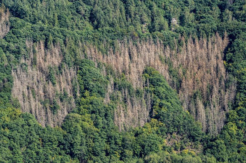 Wymieranie lasów w Niemczech /Jochen Tack via www.imago-images.de/Imago Stock and People /East News