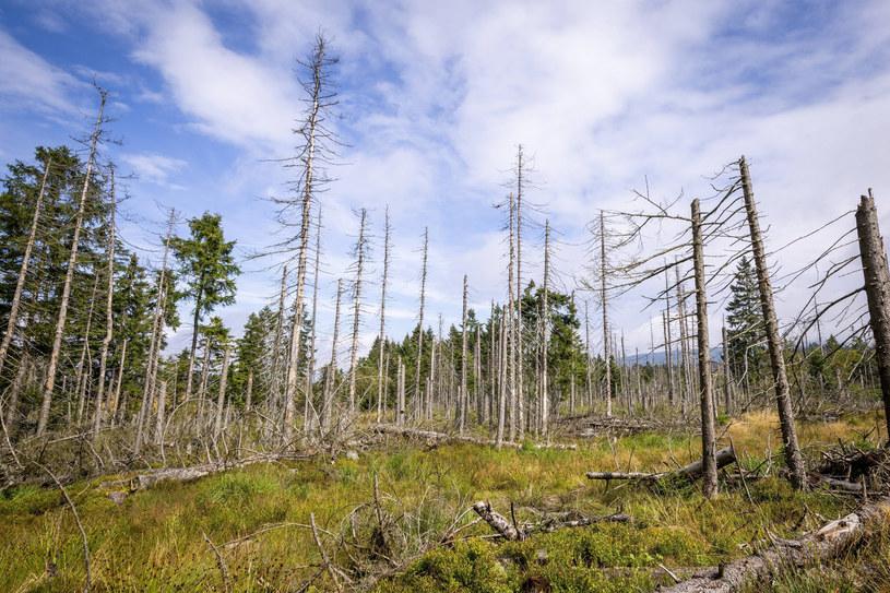 Wymieranie lasów w Niemczech /Jannis Grosse, via www.imago-images.de/Imago Stock and People /East News