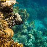 Wymieranie raf koralowych zagraża ludziom