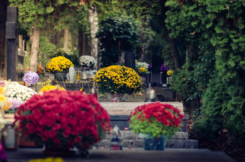Wynosząc kwiaty na cmentarz przed dniem Wszystkich Świętych należy zabezpieczyć je przed mrozem /123RF/PICSEL