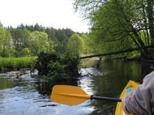 Wypadek kajakarzy na Skawie. Uratowano kilkunastu uczestników spływu