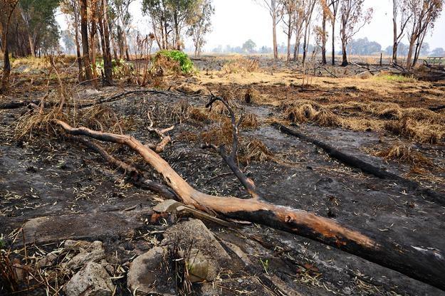 Wypalanie traw jest zabronione /© Panthermedia