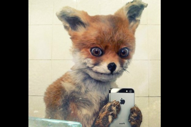 Wypchany lis zwany także Naćpanym lisem - internetowy mem, który zrobił furorę w Rosji /Internet