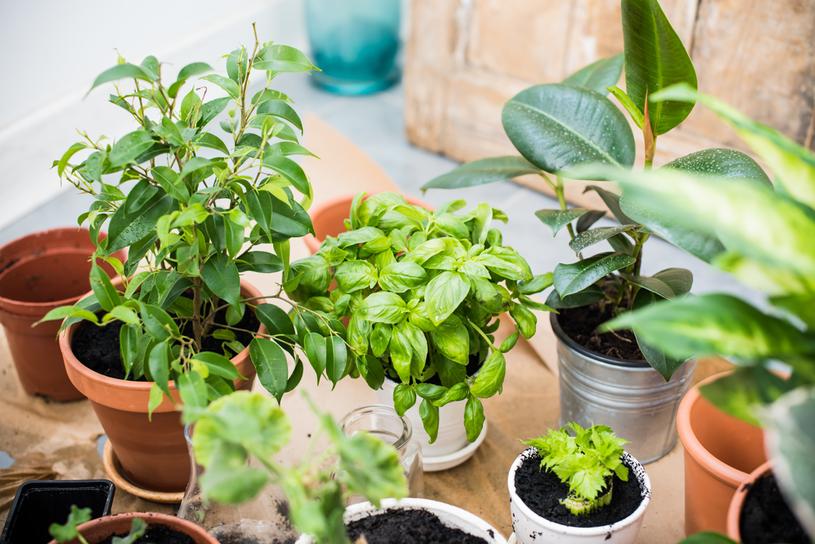 Wypełnij swój dom zielenią /123RF/PICSEL