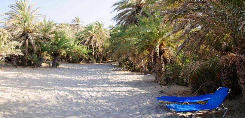 Wypoczynek pod palmami - uroki plaży Vai /123RF/PICSEL