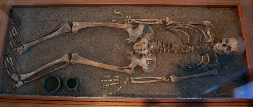 Wyposażenie grobu kultury wielbarskiej /Odkrywca