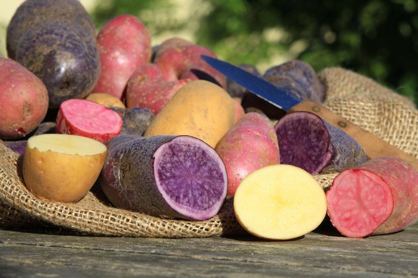 Wypróbuj różne odmiany ziemniaków /123RF/PICSEL