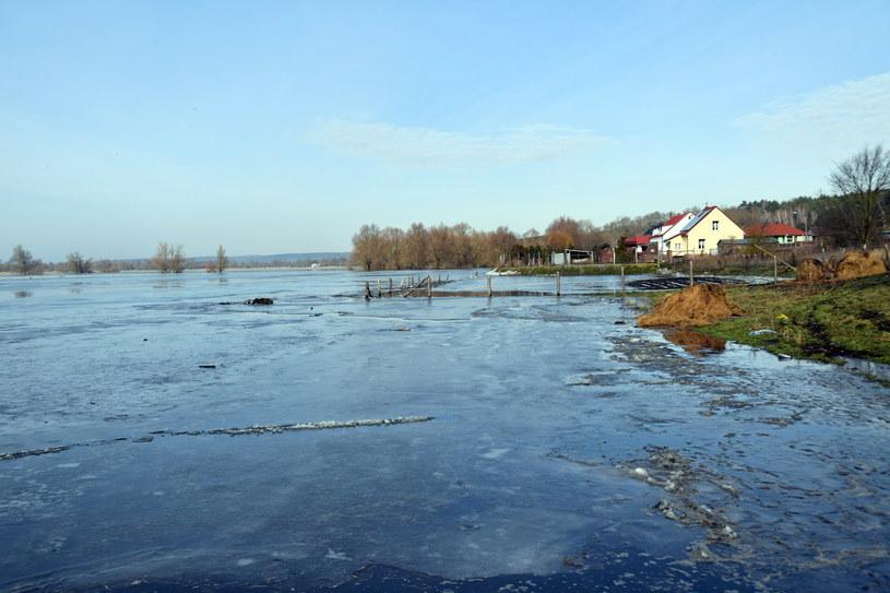Wysoki stan wody na Odrze w rejonie Gozdowic. / Marcin Bielecki    /PAP