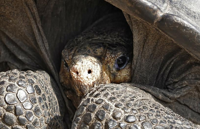 """Wyspa Fernandina - to tutaj odkryto ostatnią żyjącą przedstawicielkę """"wymarłego"""" gatunku /East News"""