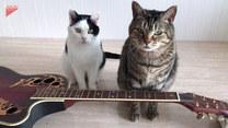 Wystarczy położyć przed nimi gitarę. Zabawne