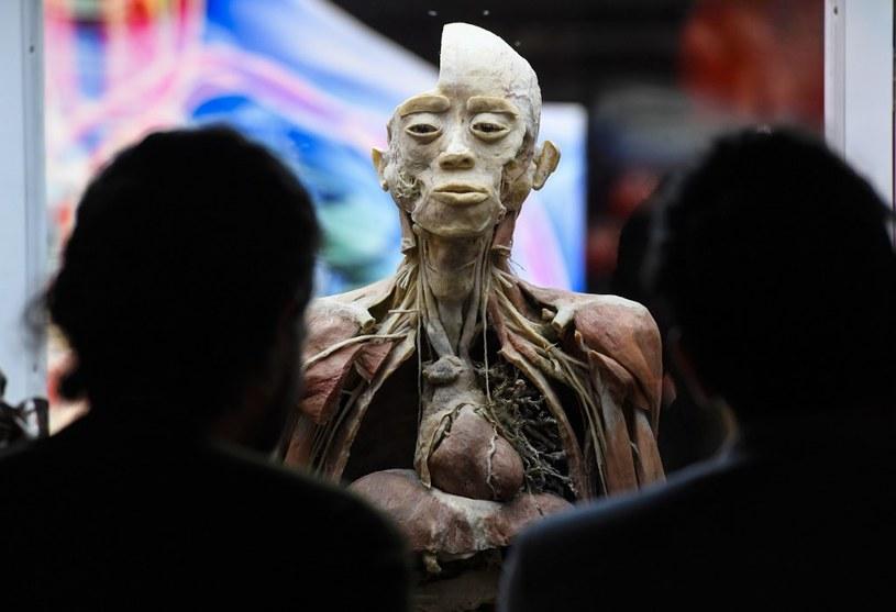 """Wystawa """"Bodies"""" w Bogocie /AFP"""