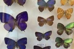 Wystawa motyli w łódźkiej Palmiarni